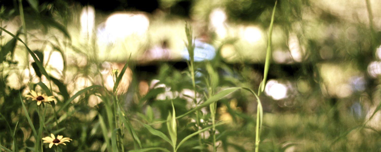 Prairie Flowers1 Marquee