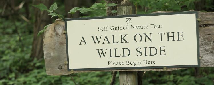 Wildlife Management in Relation to Art